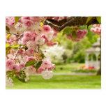 El ajardinar perfecto con el cerezo floreciente tarjeta postal