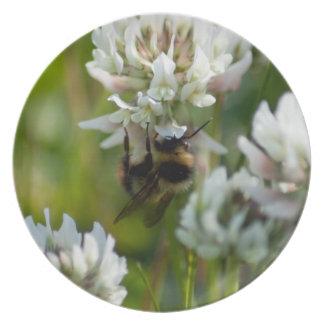 El alcanzar para el polen; Ningún texto Plato De Comida