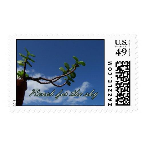 El alcanzar para los pequeños bonsais copy.jp del franqueo