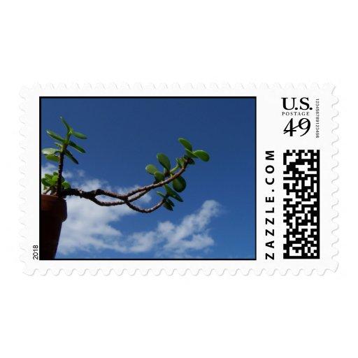 El alcanzar para los pequeños bonsais del envio