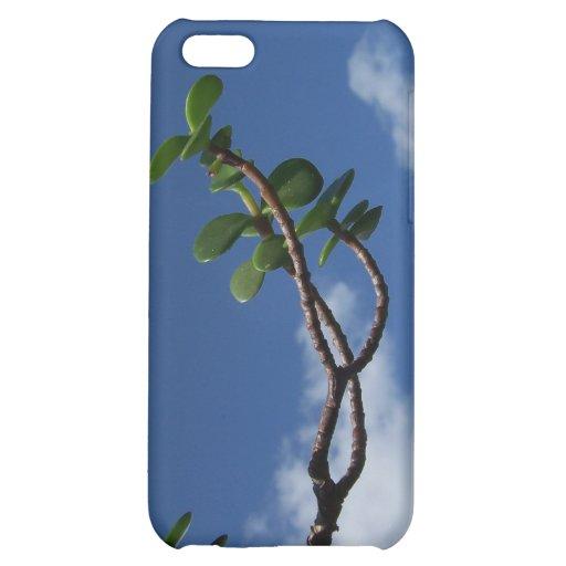 El alcanzar para los pequeños bonsais del portulac