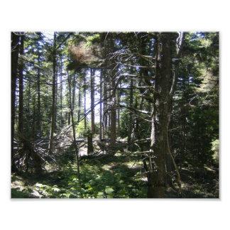 El alcohol de madera de Monhegan, maderas de Maine Arte Fotográfico