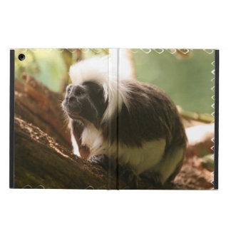 El algodón remató el mono del Tamarin