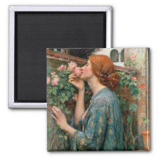 El alma del color de rosa, 1908 imán cuadrado
