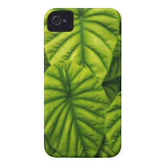El Alocasia verde Cuprea sale de la isla de Hawaii iPhone 4 Case-Mate Carcasas