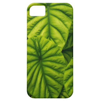 El Alocasia verde Cuprea sale de la isla de Hawaii iPhone 5 Carcasas