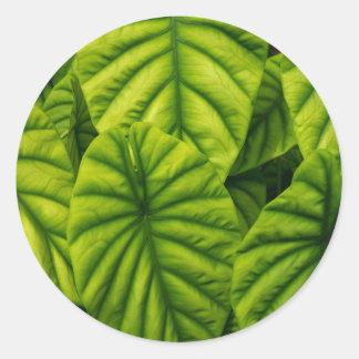 El Alocasia verde Cuprea sale de la isla de Hawaii Pegatina Redonda