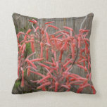 el áloe suculento florece la foto aseada rosada de almohada