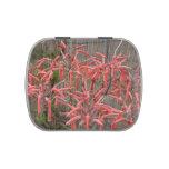 el áloe suculento florece la foto aseada rosada de frascos de dulces