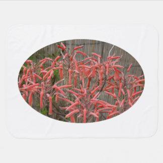 el áloe suculento florece la foto aseada rosada de mantita para bebé