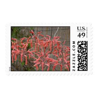 el áloe suculento florece la foto aseada rosada de franqueo
