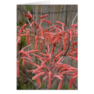 el áloe suculento florece la foto aseada rosada de tarjeta de felicitación