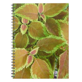 El amarillo afiló la planta del coleo libreta espiral