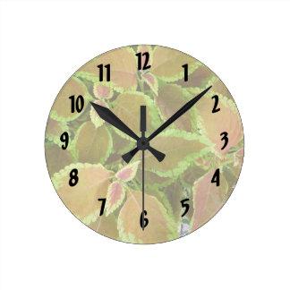 El amarillo afiló la planta del coleo reloj redondo mediano