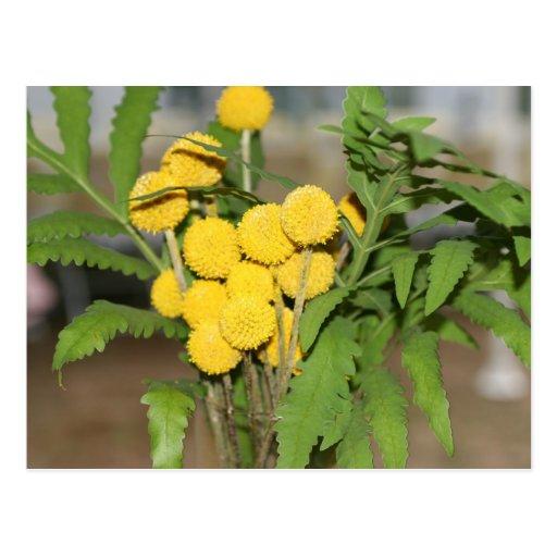 El amarillo dulce florece la postal