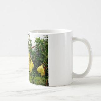 El amarillo florece el primer con el fondo de las taza básica blanca