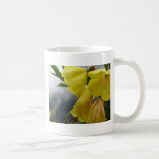 El amarillo florece el primer con las gotitas de taza básica blanca
