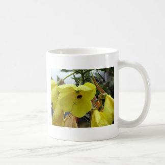 El amarillo florece el primer con las gotitas y la taza básica blanca