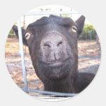 El amarillo grande de la cabra negra observa la etiquetas redondas