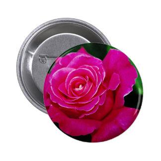 """El amarillo híbrido paz del rosa"""" del rosa de té d pins"""