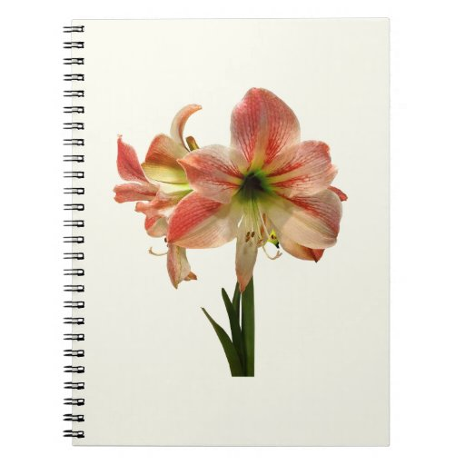 El Amaryllis Apple florece Cuaderno