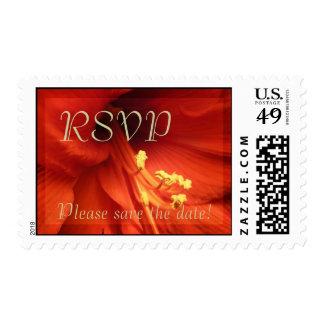el amaryllis rojo RSVP satisface reserva la fecha Franqueo