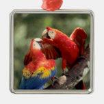 El Amazonas, el Brasil. Pares de Macaws del Adorno Navideño Cuadrado De Metal