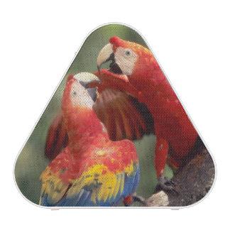 El Amazonas, el Brasil. Pares de Macaws del escarl Altavoz Bluetooth