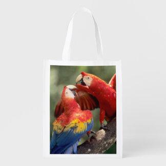 El Amazonas, el Brasil. Pares de Macaws del escarl Bolsa De La Compra