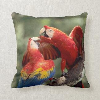 El Amazonas, el Brasil. Pares de Macaws del escarl Cojin
