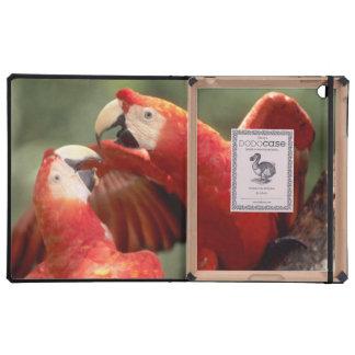 El Amazonas, el Brasil. Pares de Macaws del escarl iPad Protectores