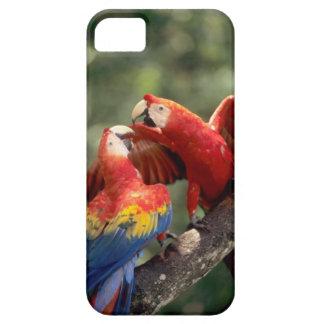 El Amazonas, el Brasil. Pares de Macaws del escarl iPhone 5 Case-Mate Coberturas