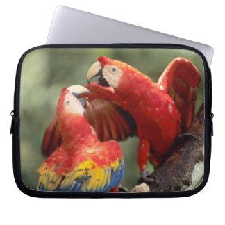 El Amazonas, el Brasil. Pares de Macaws del escarl Funda Portátil
