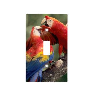 El Amazonas, el Brasil. Pares de Macaws del escarl Tapa Para Interruptor