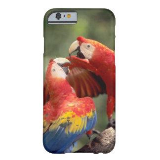 El Amazonas, el Brasil. Pares de Macaws del Funda De iPhone 6 Barely There