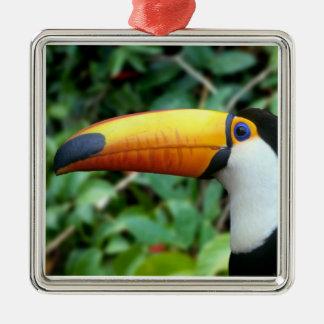 El Amazonas, el Brasil. toucan Amarillo-beaked con Ornamento Para Reyes Magos