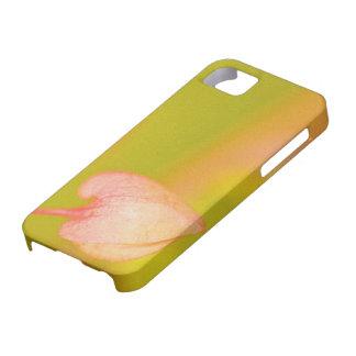 el amor arquea hacia fuera iPhone 5 carcasas