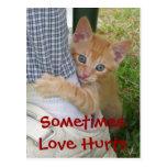 El amor de Dax del gatito daña la postal