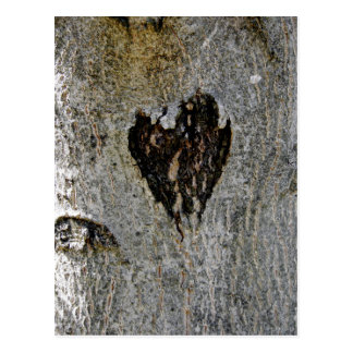 El amor de la naturaleza postal