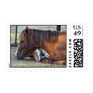 El amor de la yegua timbre postal