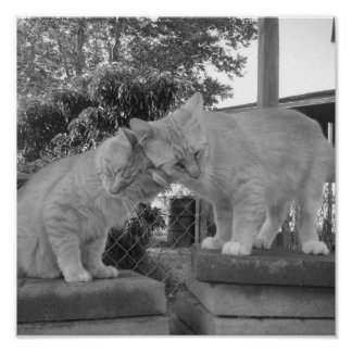 El amor del gatito Nuzzle… Póster