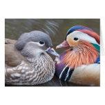 "El ""amor Ducks"" Notecard Tarjeta Pequeña"
