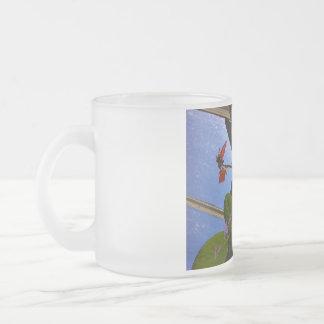 el amor florece outta en ninguna parte asalta taza de café