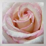El amor primero se ruboriza color de rosa impresiones