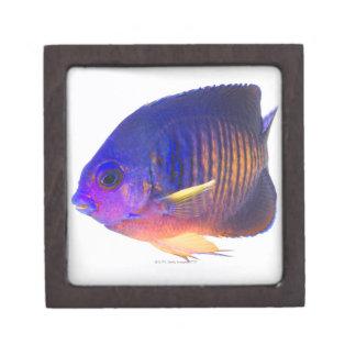 El angelfish two-spined cajas de joyas de calidad