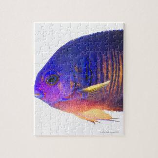 El angelfish two-spined puzzles con fotos