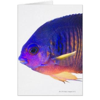 El angelfish two-spined tarjeta de felicitación