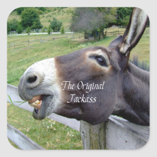El animal del campo divertido de la mula del burro pegatina cuadrada