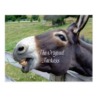 El animal del campo divertido de la mula del burro postal