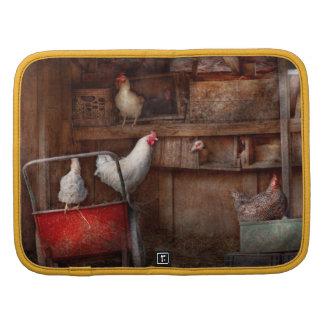 El animal - pollo - el pato es espía organizadores
